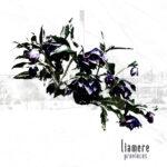 Liamere - Provinces